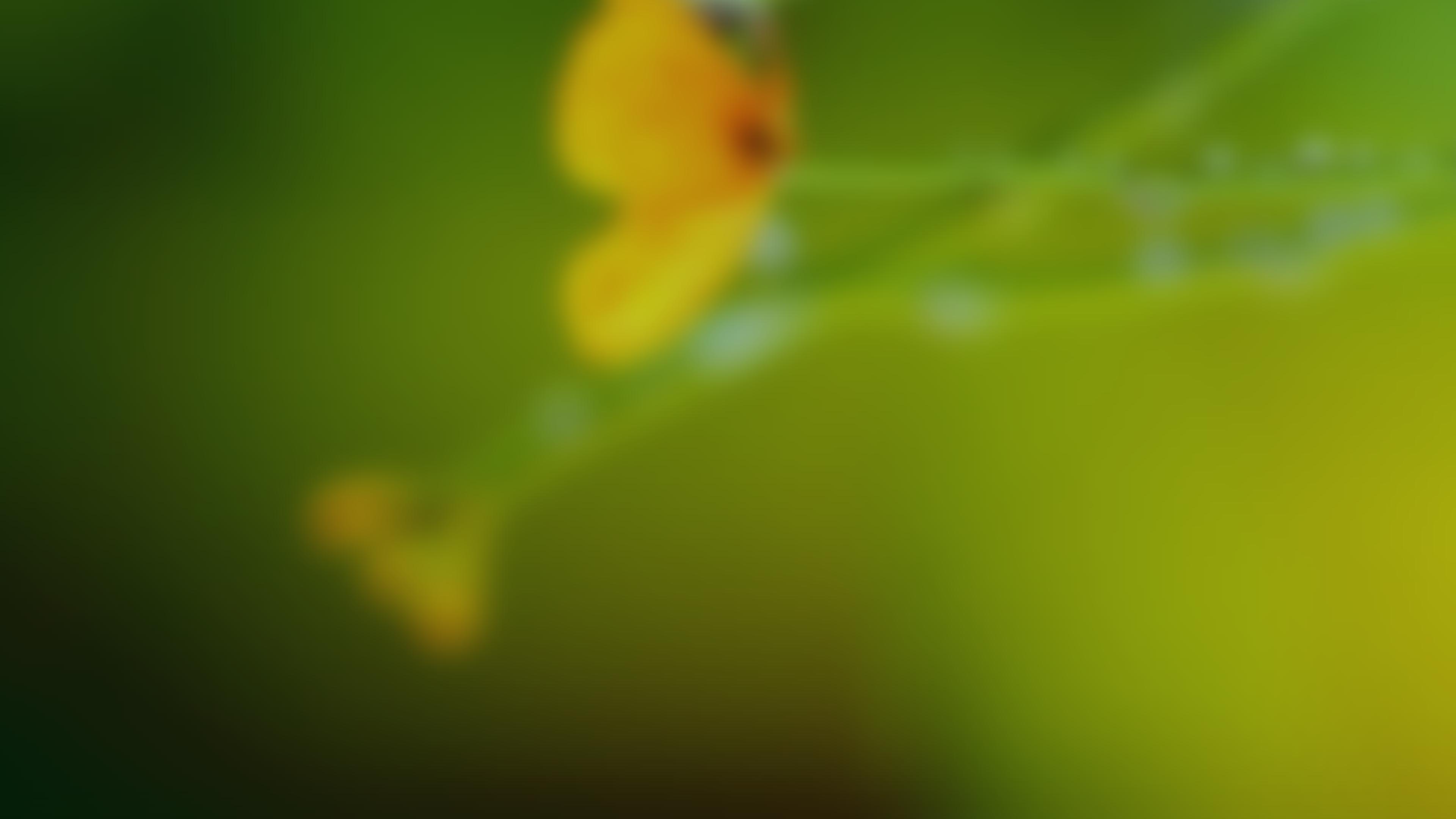BE20200827 - Summer Celebration - banner - Correct Size - 1920px × 108